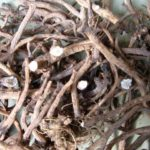 MASLAČAK - Taraxacum officinalis - suhi korijen maslačka