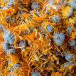 NEVEN - Calendula officinalis - suhi cvijet nevena