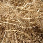 PIRIKA - Agrapyrum repens -suhi korijen pirike