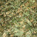 GLOG - Carataegi sumitates - suhi vršci gloga (cvijet i list zajedno)